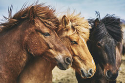 custom-horse-portraits hero image