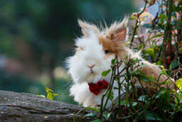 custom-rabbit-portraits hero image