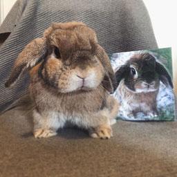 Custom bunny portrait with bunny