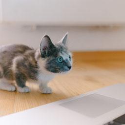 good photo for a custom cat portrait