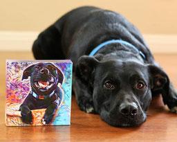 colorful dog portrait