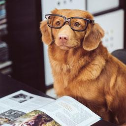 Good photo for a dog portrait