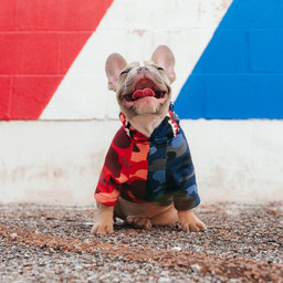 good photo for a custom dog portrait