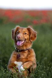 good-dog-photo-2