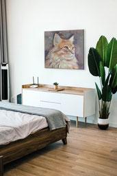 scandan-cat