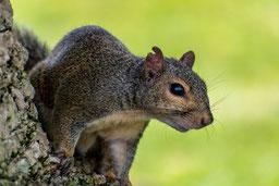 squirrelphoto