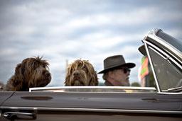 custom-dog-portraits hero image