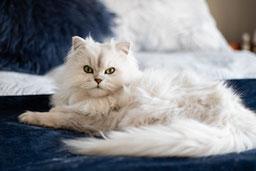 custom-cat-portraits hero image